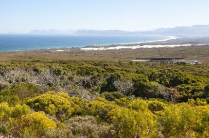 Grootbos-Forest-Lodge-Aussicht